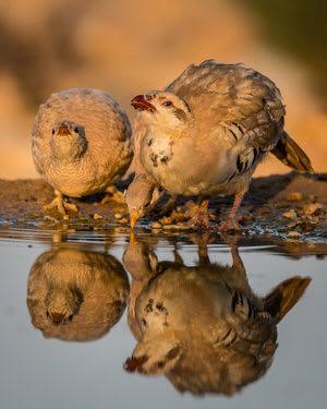התמונות הזוכות בתחרות הצילום - אקולוגיות של יצורים בבית גידולם